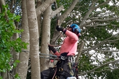 Qualified Arborists